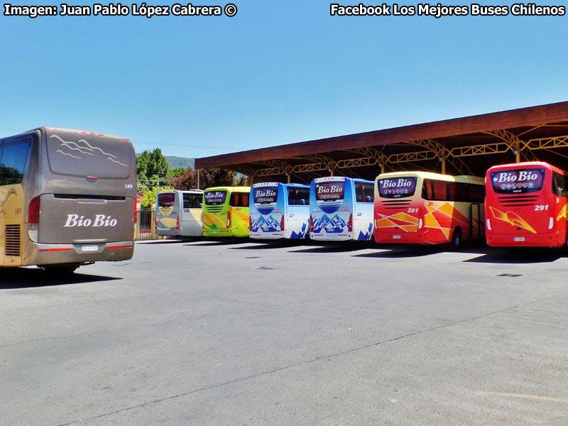 Terminal Buses Bio Bio Angol - 2