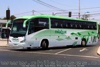 buses-nilahue-4 thumb