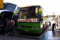 gama-bus-1 thumb